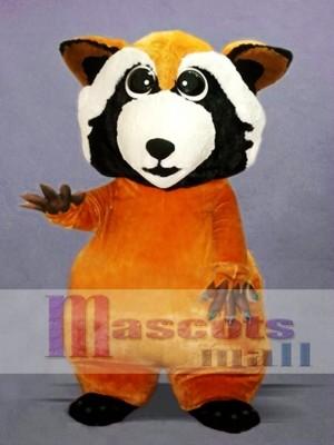 Pequeño mapache lindo Disfraz de mascota