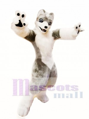 Lobo gris blanco lindo Disfraz de mascota