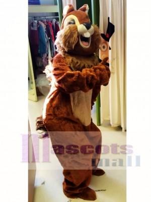 Ardilla animal Disfraz de mascota