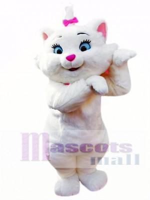 Lindo gato Disfraz de mascota